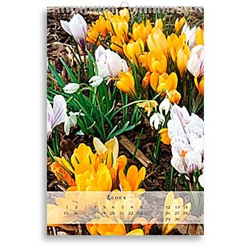 Foto kalendář Tigris